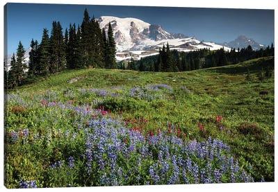 Wildflowers On A Hill, Mount Rainier National Park, Washington State, USA I Canvas Art Print