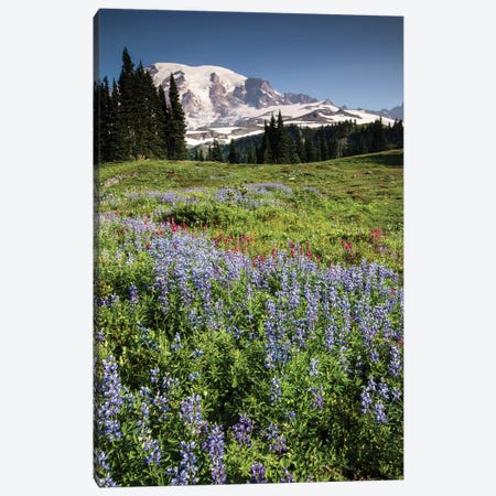 Wildflowers On A Hill, Mount Rainier National Park, Washington State, USA II Canvas Print #PIM15065} by Panoramic Images Canvas Print