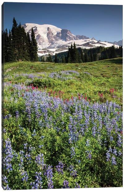 Wildflowers On A Hill, Mount Rainier National Park, Washington State, USA II Canvas Art Print