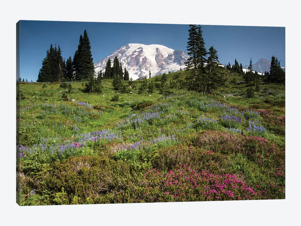 Wildflowers On A Hill, Mount Rainier National Park, Washington State, USA III by Panoramic Images 1-piece Canvas Art