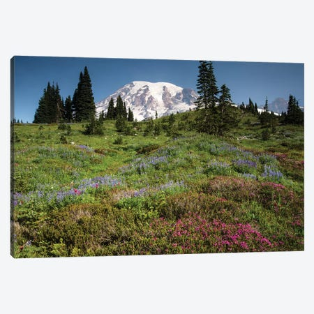 Wildflowers On A Hill, Mount Rainier National Park, Washington State, USA III Canvas Print #PIM15066} by Panoramic Images Art Print