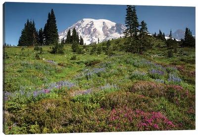Wildflowers On A Hill, Mount Rainier National Park, Washington State, USA III Canvas Art Print