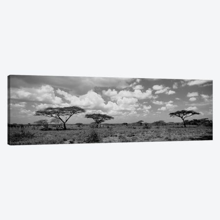 Acacia Trees On A Landscape, Lake Ndutu, Tanzania Canvas Print #PIM15074} by Panoramic Images Canvas Artwork