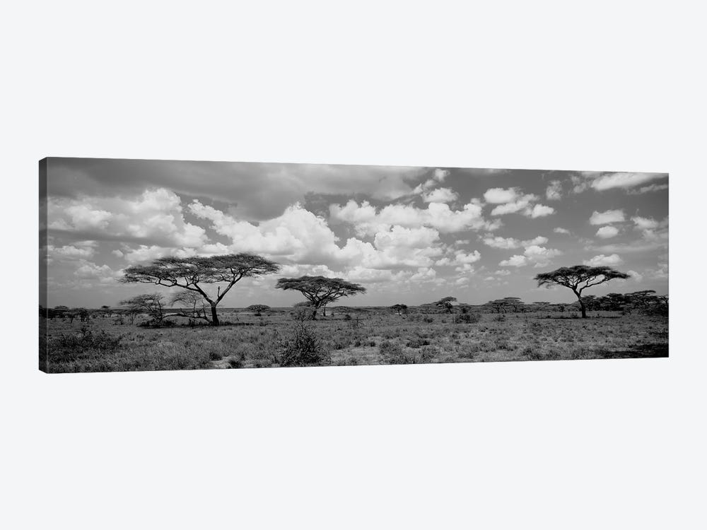 Acacia Trees On A Landscape, Lake Ndutu, Tanzania by Panoramic Images 1-piece Art Print