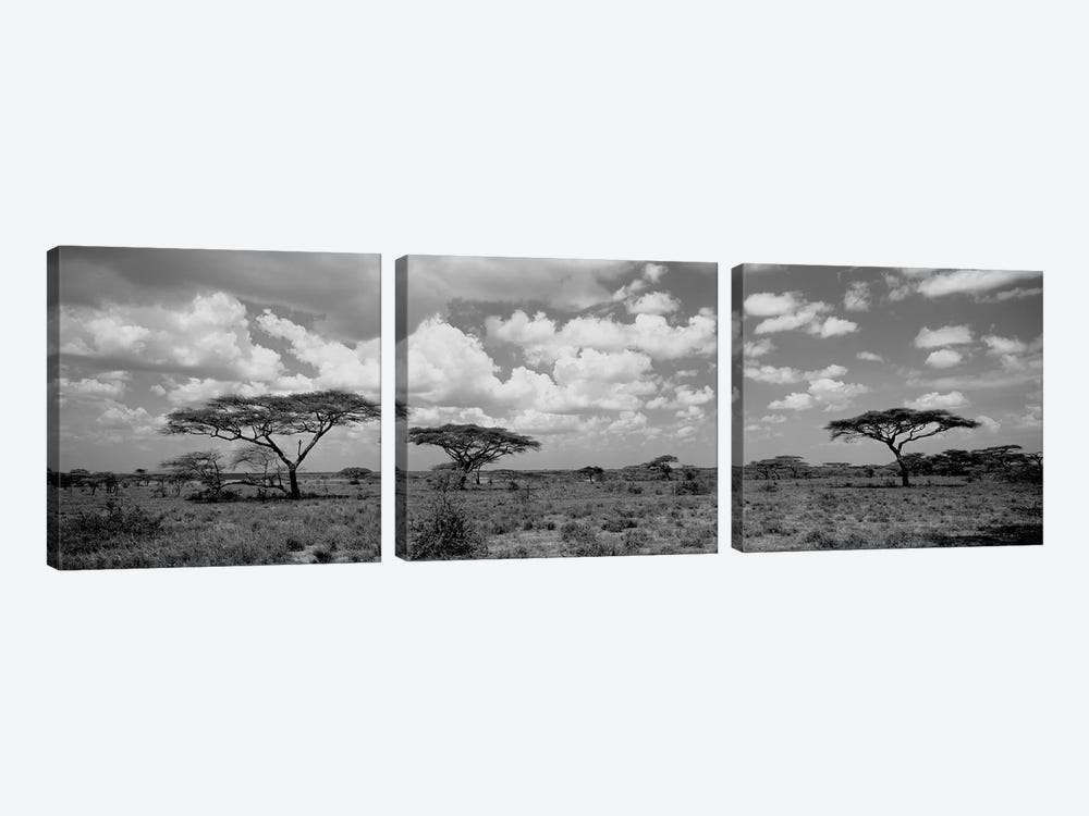 Acacia Trees On A Landscape, Lake Ndutu, Tanzania by Panoramic Images 3-piece Art Print