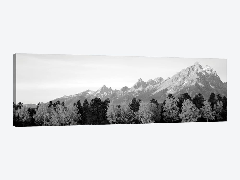 Aspen Trees On A Mountainside, Grand Teton, Teton Range, Grand Teton National Park, Wyoming, USA by Panoramic Images 1-piece Canvas Wall Art