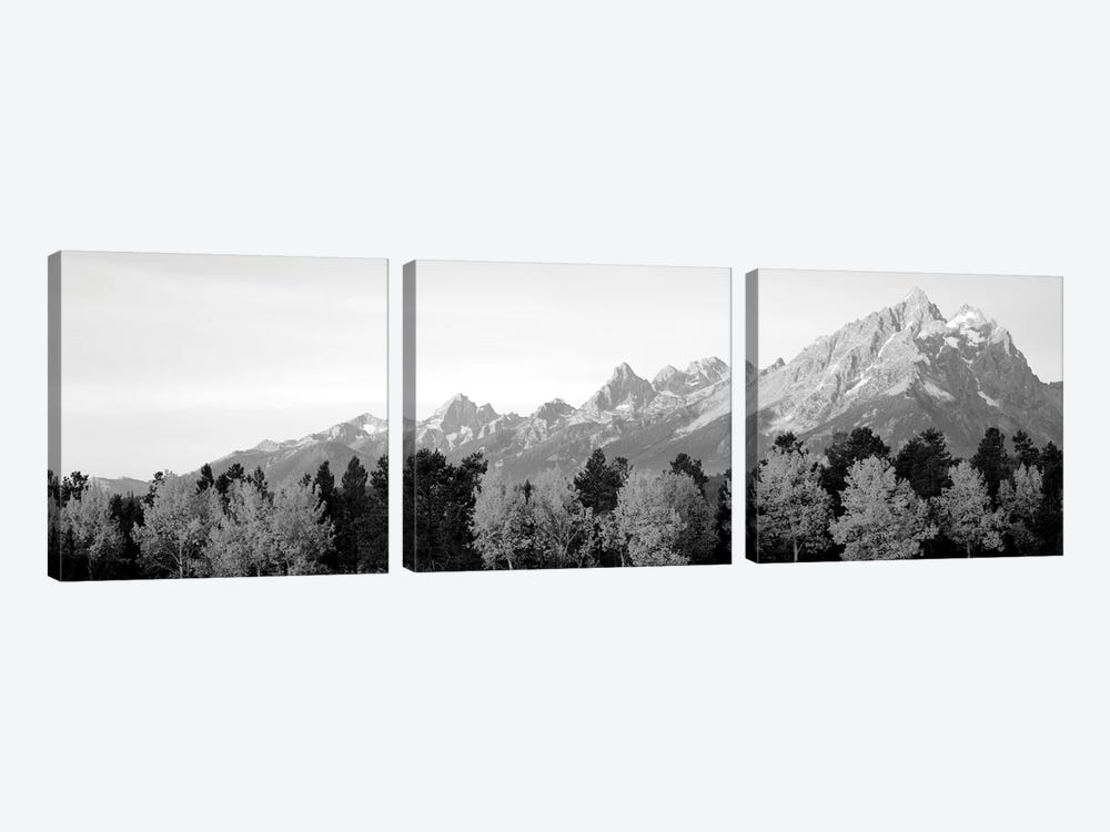 Aspen Trees On A Mountainside, Grand Teton, Teton Range, Grand Teton National Park, Wyoming, USA by Panoramic Images 3-piece Canvas Wall Art