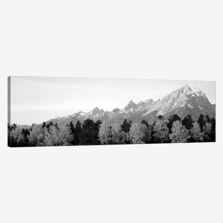 Aspen Trees On A Mountainside, Grand Teton, Teton Range, Grand Teton National Park, Wyoming, USA Canvas Print #PIM15079} by Panoramic Images Art Print