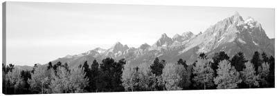 Aspen Trees On A Mountainside, Grand Teton, Teton Range, Grand Teton National Park, Wyoming, USA Canvas Art Print
