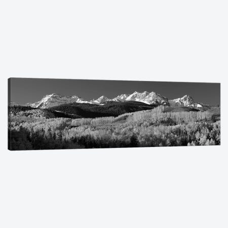 Aspens, Autumn, Rocky Mountains, Colorado, USA Canvas Print #PIM15080} by Panoramic Images Canvas Art