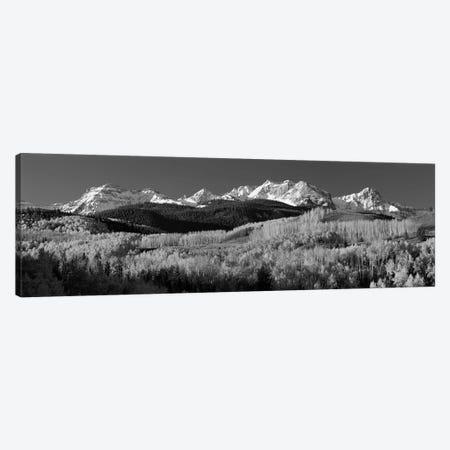 Aspens, Autumn, Rocky Mountains, Colorado, USA Canvas Print #PIM15080} by Panoramic Images Canvas Art