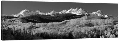 Aspens, Autumn, Rocky Mountains, Colorado, USA Canvas Art Print