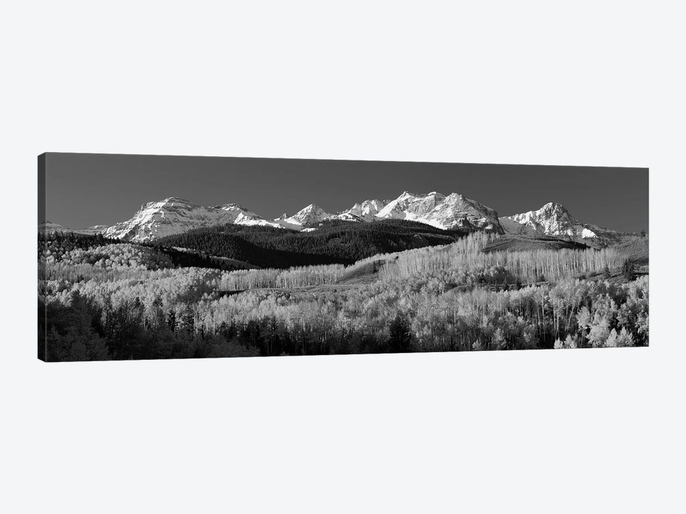 Aspens, Autumn, Rocky Mountains, Colorado, USA by Panoramic Images 1-piece Canvas Wall Art