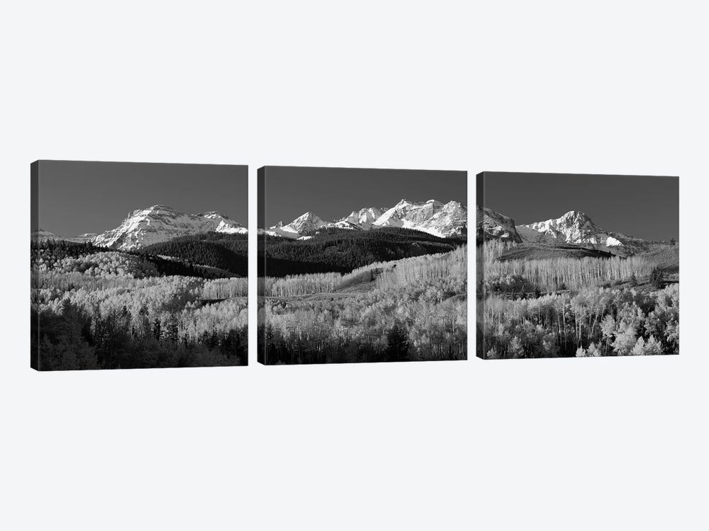 Aspens, Autumn, Rocky Mountains, Colorado, USA by Panoramic Images 3-piece Canvas Wall Art