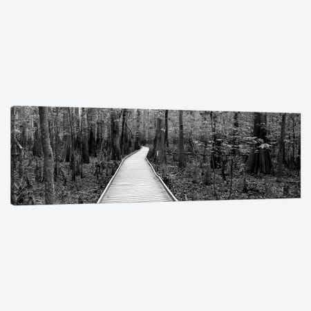 Boardwalk Passing Through A Forest, Congaree National Park, South Carolina, USA Canvas Print #PIM15086} by Panoramic Images Canvas Print