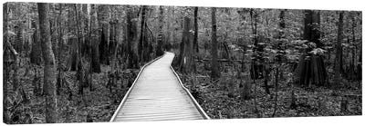 Boardwalk Passing Through A Forest, Congaree National Park, South Carolina, USA Canvas Art Print