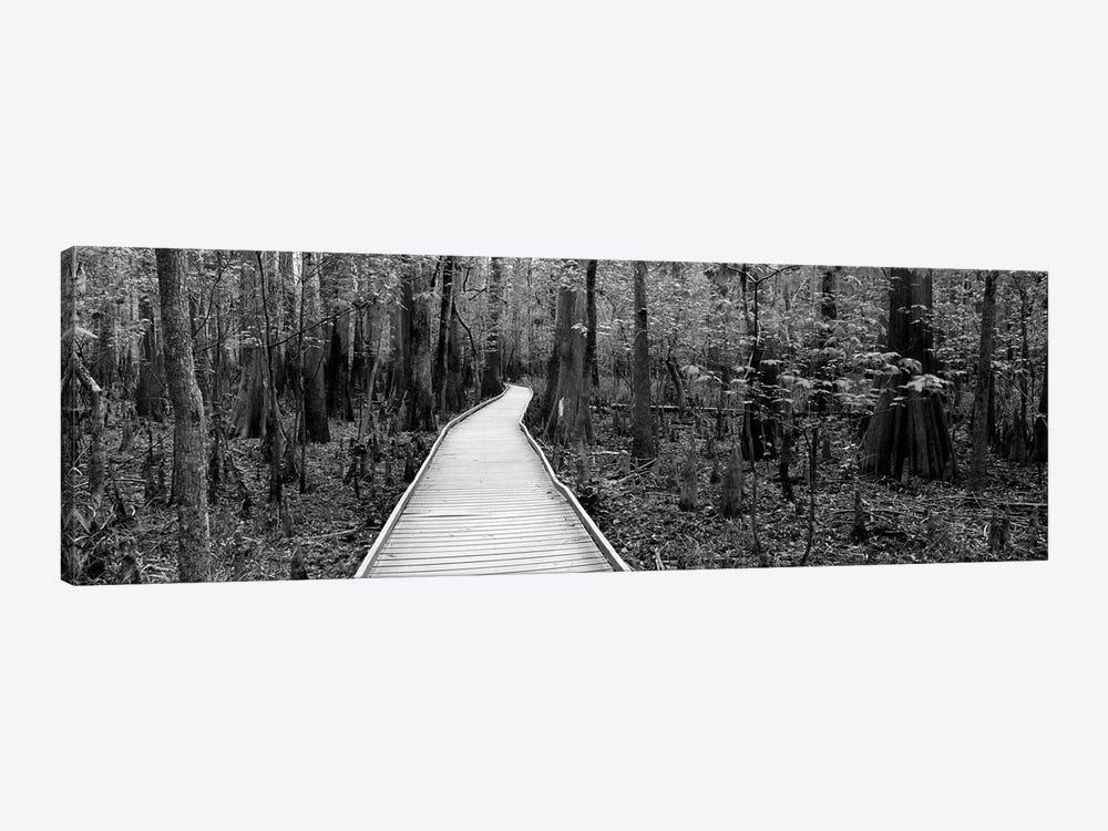 Boardwalk Passing Through A Forest, Congaree National Park, South Carolina, USA by Panoramic Images 1-piece Canvas Art