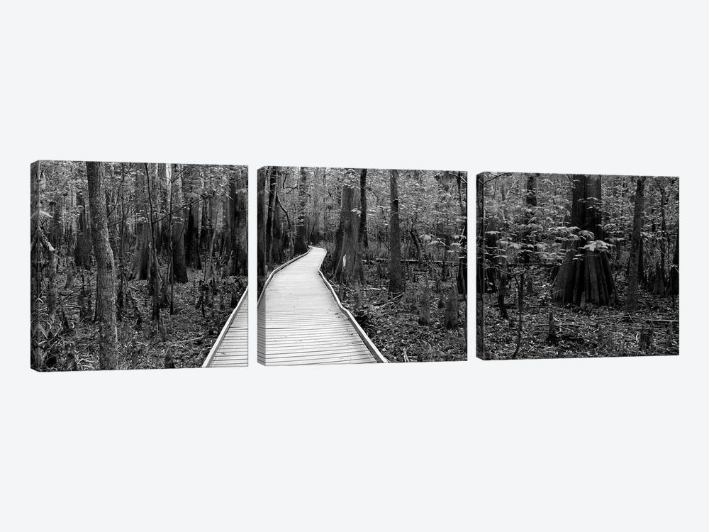 Boardwalk Passing Through A Forest, Congaree National Park, South Carolina, USA by Panoramic Images 3-piece Canvas Artwork