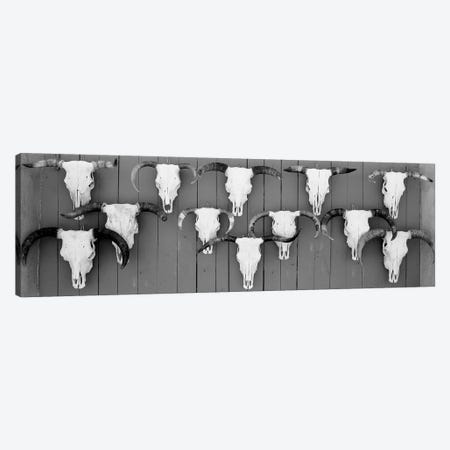 Cow Skulls Hanging On Planks, Taos, New Mexico, USA Canvas Print #PIM15119} by Panoramic Images Canvas Wall Art