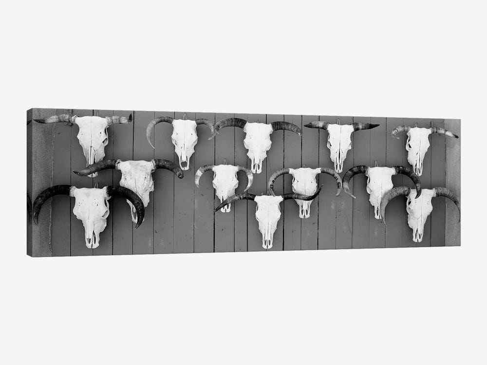 Cow Skulls Hanging On Planks, Taos, New Mexico, USA by Panoramic Images 1-piece Art Print