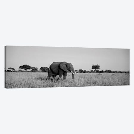 Elephant Tarangire Tanzania Africa Canvas Print #PIM15125} by Panoramic Images Canvas Art