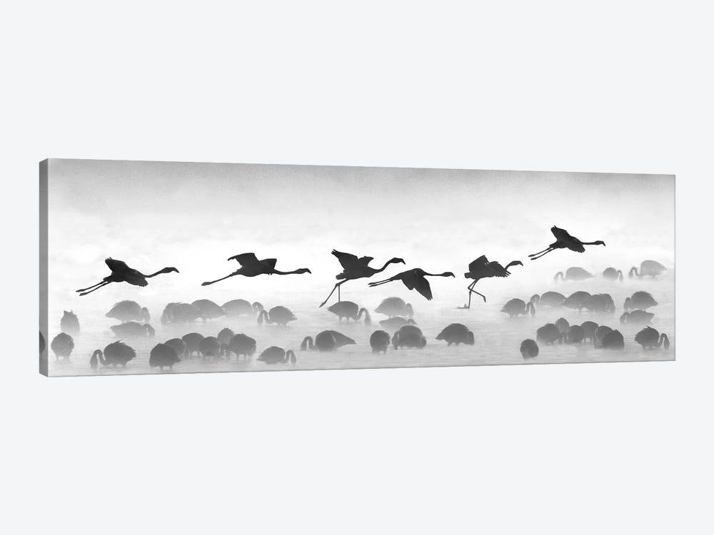 Flamingos Landing, Kenya by Panoramic Images 1-piece Canvas Artwork