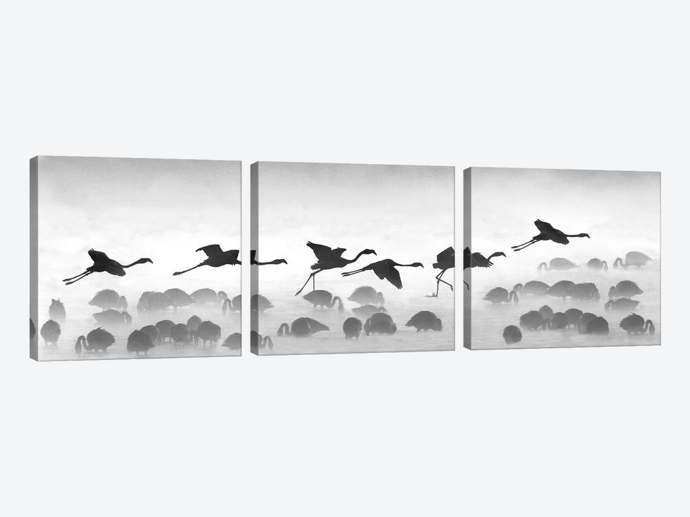 Flamingos Landing, Kenya by Panoramic Images 3-piece Canvas Art