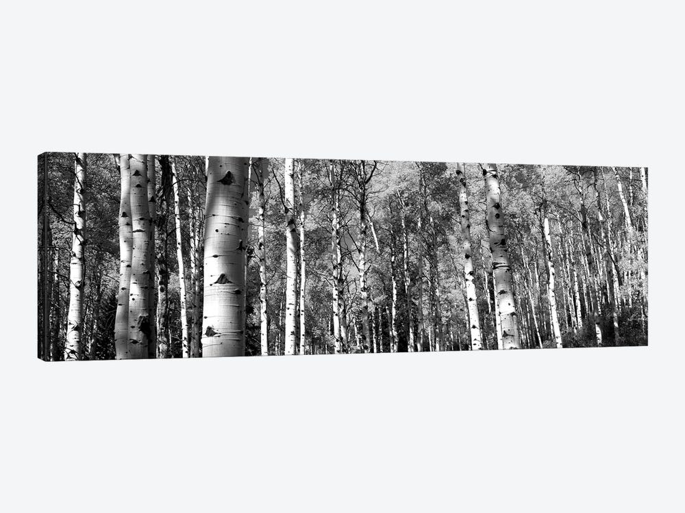 Forest, Grand Teton National Park, Teton County, Wyoming, USA by Panoramic Images 1-piece Canvas Wall Art