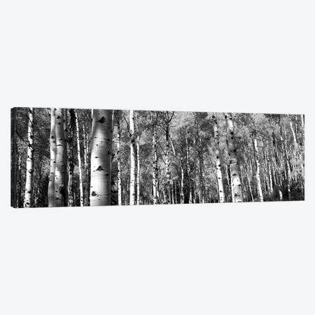 Forest, Grand Teton National Park, Teton County, Wyoming, USA Canvas Print #PIM15132} by Panoramic Images Canvas Wall Art