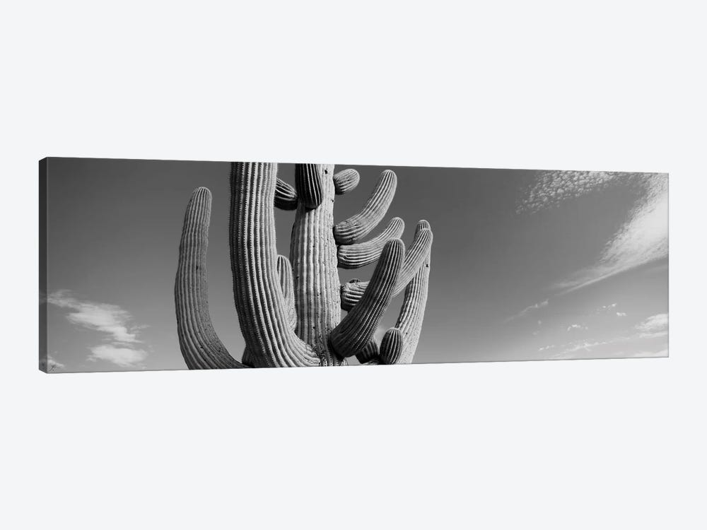 Low-Angle View Of A Saguaro Cactus (Carnegiea Gigantea), Saguaro National Park, Tucson, Pima County, Arizona, USA by Panoramic Images 1-piece Canvas Print