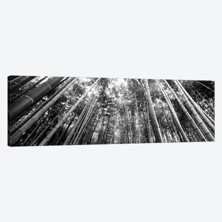 Low-Angle View Of Bamboo Trees, Arashiyama, Kyoto Prefecture, Kinki Region, Honshu, Japan 3-Piece Canvas #PIM15176} by Panoramic Images Art Print
