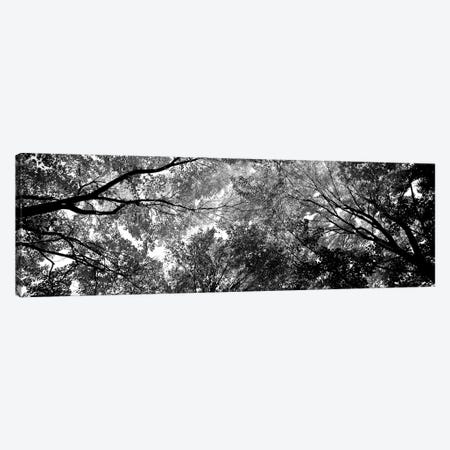 Low-Angle View Of Trees Canvas Print #PIM15186} by Panoramic Images Canvas Artwork