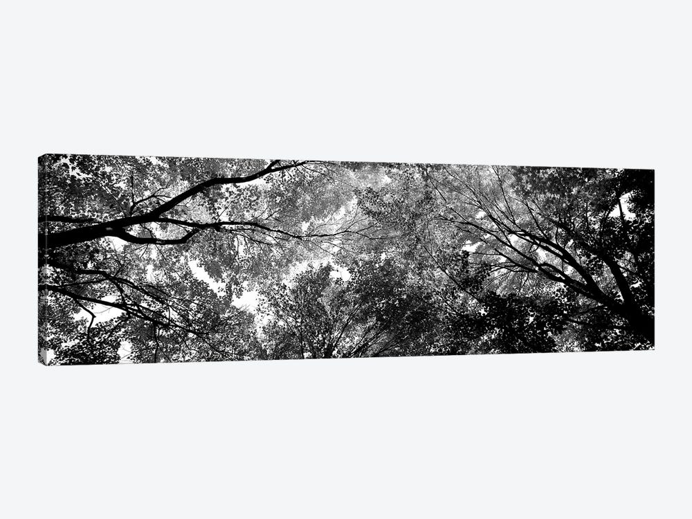 Low-Angle View Of Trees by Panoramic Images 1-piece Art Print
