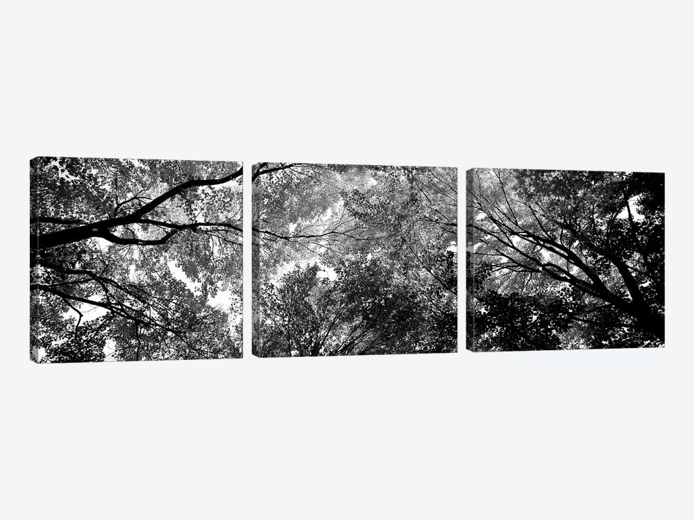 Low-Angle View Of Trees by Panoramic Images 3-piece Canvas Print