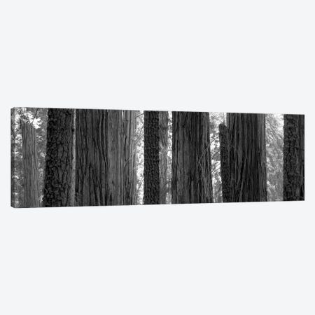 Sequoia Grove Sequoia National Park California USA Canvas Print #PIM15226} by Panoramic Images Art Print