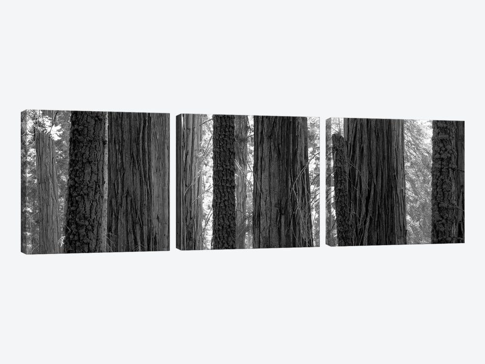 Sequoia Grove Sequoia National Park California USA by Panoramic Images 3-piece Art Print