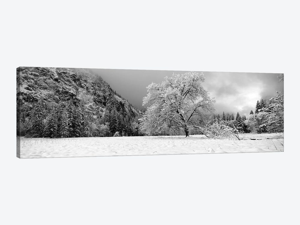 Snow Covered Oak Tree In A Valley, Yosemite National Park, California, USA by Panoramic Images 1-piece Canvas Art