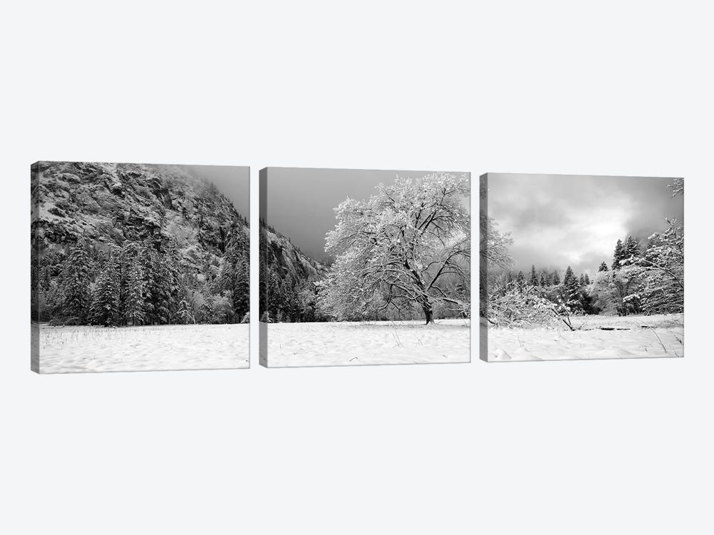 Snow Covered Oak Tree In A Valley, Yosemite National Park, California, USA by Panoramic Images 3-piece Canvas Wall Art