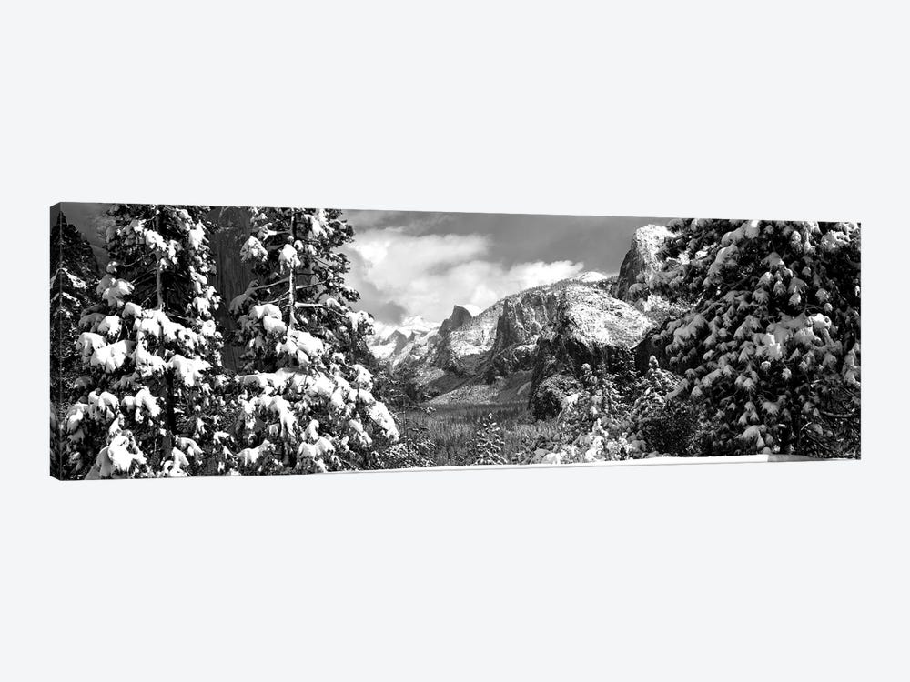 Snowy Trees In Winter, Yosemite Valley, Yosemite National Park, California, USA by Panoramic Images 1-piece Canvas Print