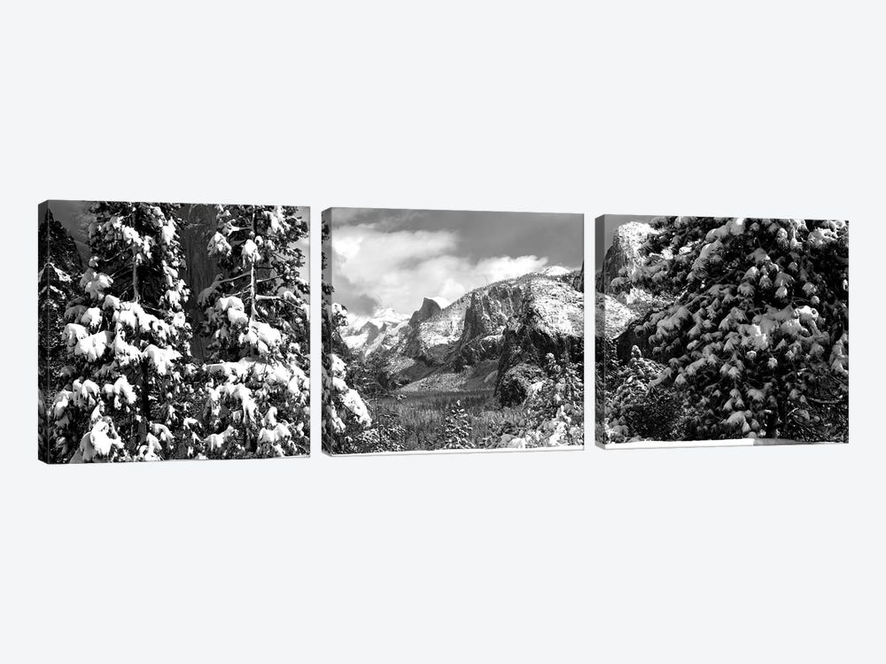 Snowy Trees In Winter, Yosemite Valley, Yosemite National Park, California, USA by Panoramic Images 3-piece Canvas Print