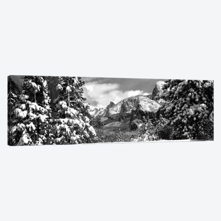 Snowy Trees In Winter, Yosemite Valley, Yosemite National Park, California, USA Canvas Print #PIM15233} by Panoramic Images Art Print