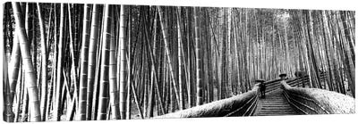Stepped Walkway Passing Through A Bamboo Forest, Arashiyama, Kyoto Prefecture, Kinki Region, Honshu, Japan Canvas Art Print