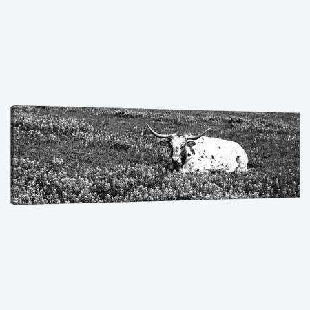 Texas Longhorn Cow Sitting On A Field, Hill County, Texas, USA Canvas Print #PIM15253} by Panoramic Images Art Print