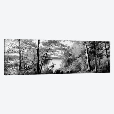 Trees At The Lakeside, Great Sacandaga Lake, Adirondack Mountains, New York State, USA Canvas Print #PIM15258} by Panoramic Images Canvas Art Print
