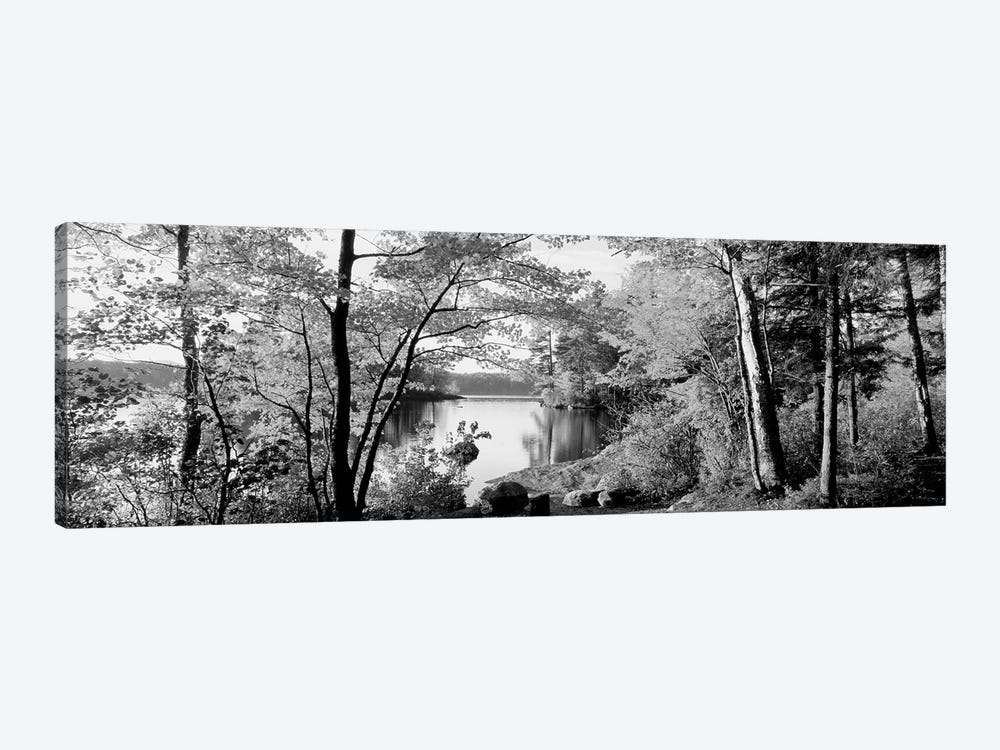 Trees At The Lakeside, Great Sacandaga Lake, Adirondack Mountains, New York State, USA by Panoramic Images 1-piece Canvas Artwork