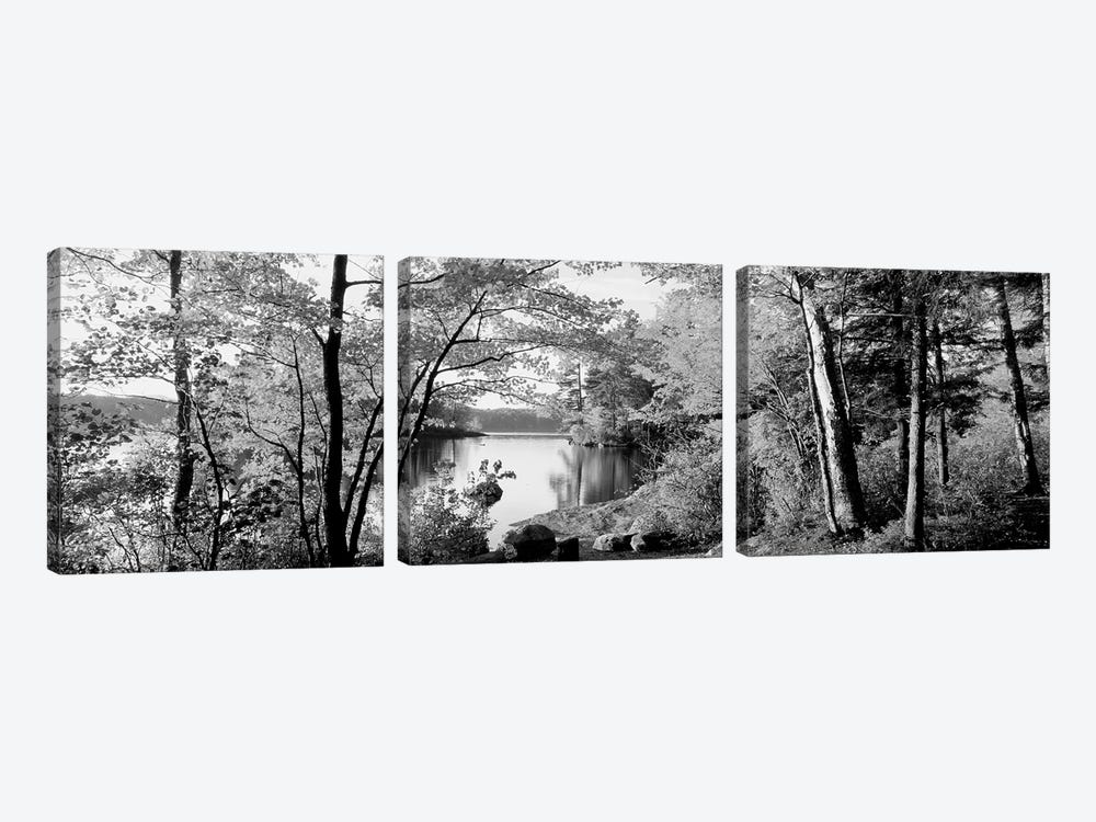Trees At The Lakeside, Great Sacandaga Lake, Adirondack Mountains, New York State, USA by Panoramic Images 3-piece Canvas Wall Art