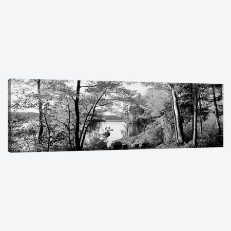 Trees At The Lakeside, Great Sacandaga Lake, Adirondack Mountains, New York State, USA Canvas Print #PIM15258} by Panoramic Images Canvas Art Print