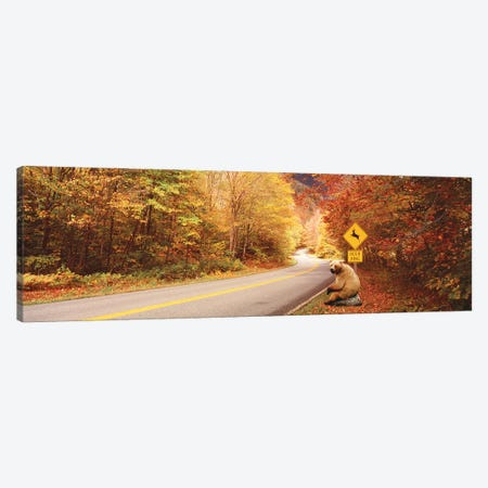Autumn Road With Bear At Deer Crossing Sign, VT, USA Canvas Print #PIM15269} by Panoramic Images Canvas Artwork
