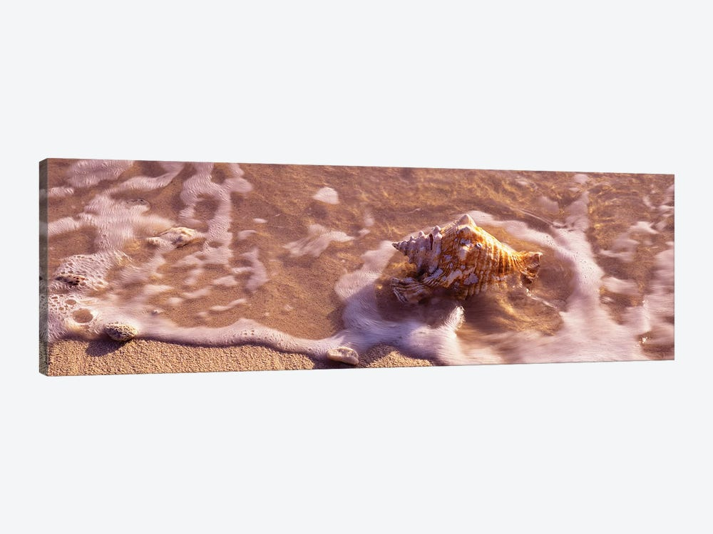 Conch Shell On The Beach, Grand Cayman, Cayman Islands,  by Panoramic Images 1-piece Canvas Art Print