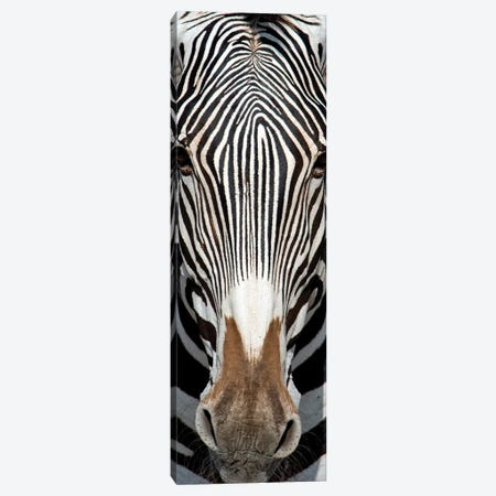 Grevey's Zebra, Samburu National Reserve, Kenya Canvas Print #PIM15293} by Panoramic Images Art Print